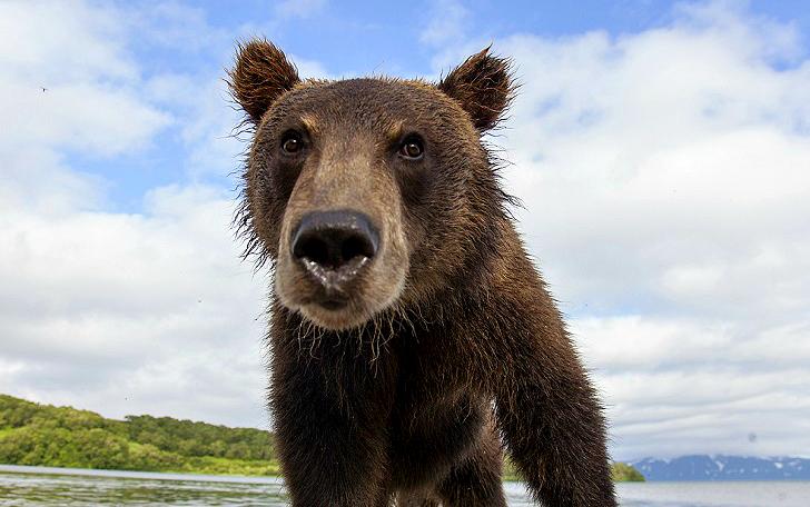 Детки в клетке, или Как мы оказались с глазу на глаз с медведями