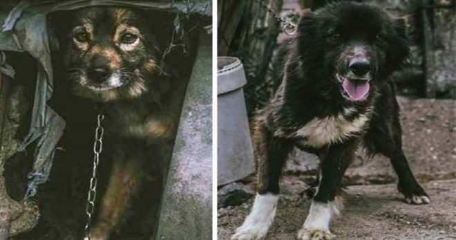 «Они свое отработали»: жестокосердные люди посадили на цепь собак, и только доброта помогла животным стать счастливыми