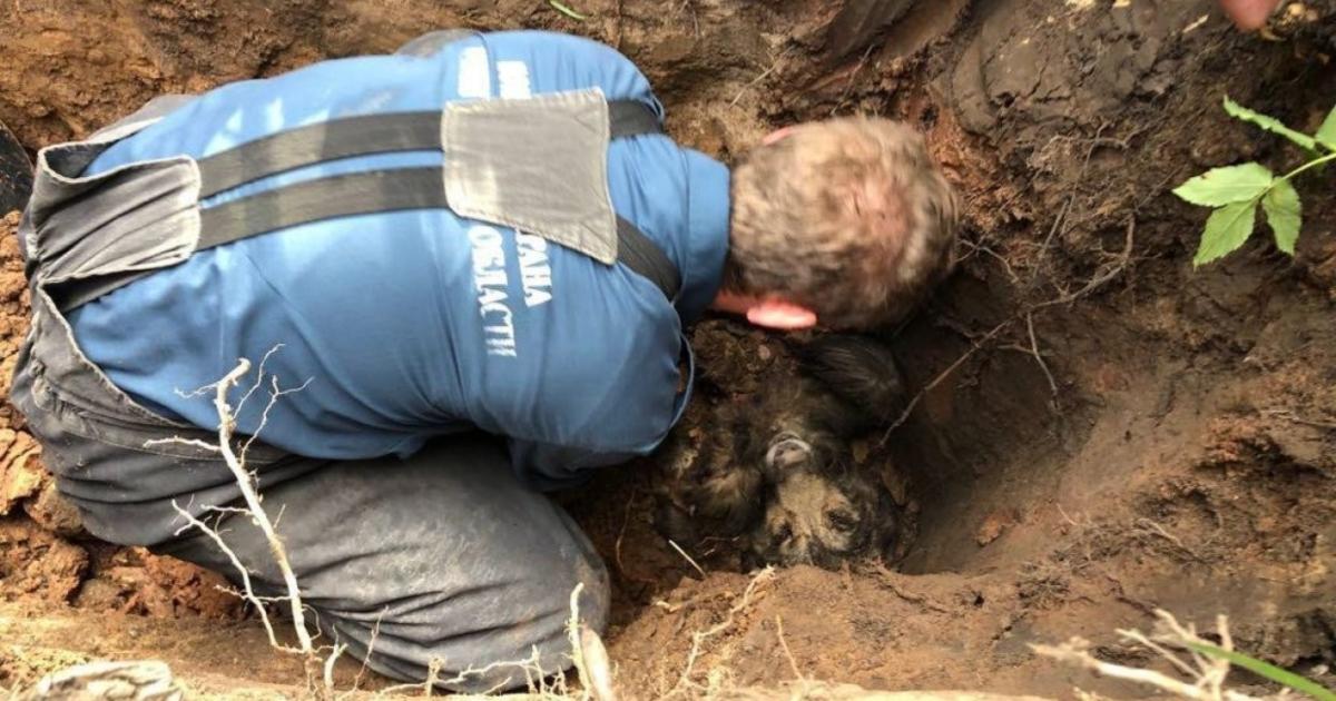 Женщина услышала собачий вой… Помочь она не смогла, и пришлось вызвать МЧС!