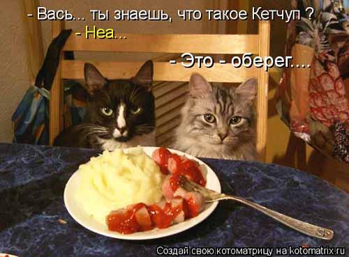 КОШКИ, СОБАКИ... мысли вслух...)))