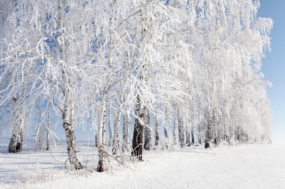 Зима — это шедевр!