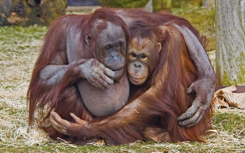 сами ржачные картинки животных пара него почти нет