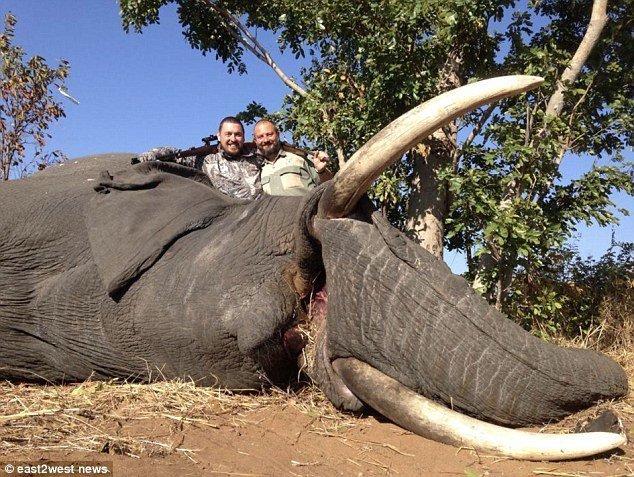 Бывший хирург зарабатывает $1 миллион в год на организации VIP-охоты в Африке бизнес, бизнесмены, дикие животные, животные, звери, охота, охотники, природа