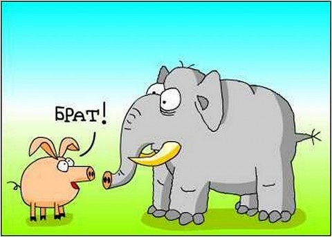 ПРИТЧА НЕДЕЛИ. Слон и свинья