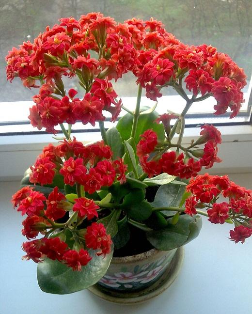 Семена комнатных растений почтой Интернетмагазин НПО