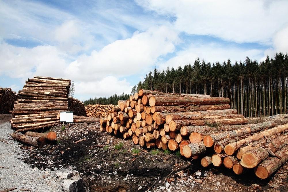 Глава Рослесхоза предложил запретить сибирякам продавать лес в Китай