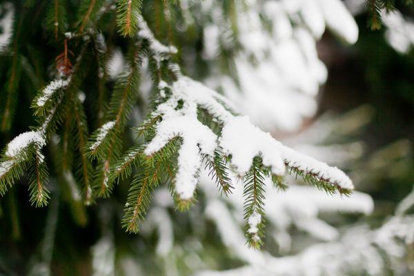Сезонные работы в саду и огороде: конец декабря – начало января
