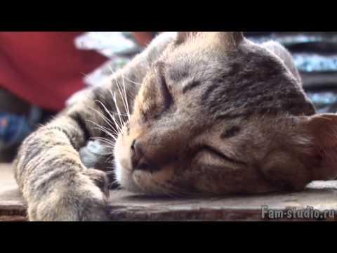 Бангкок - невозмутимый кот. Буддист?