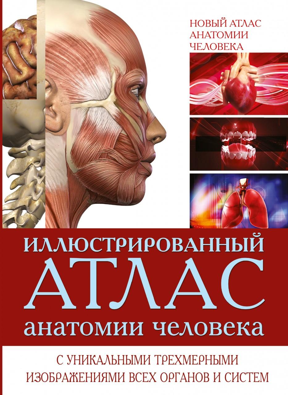 Атлас анатомии человека 9
