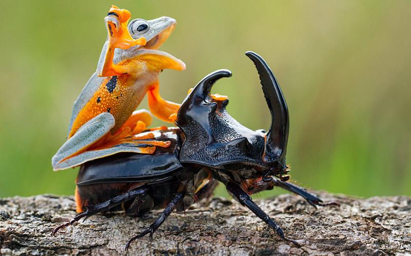 Животные, которые не прочь п…