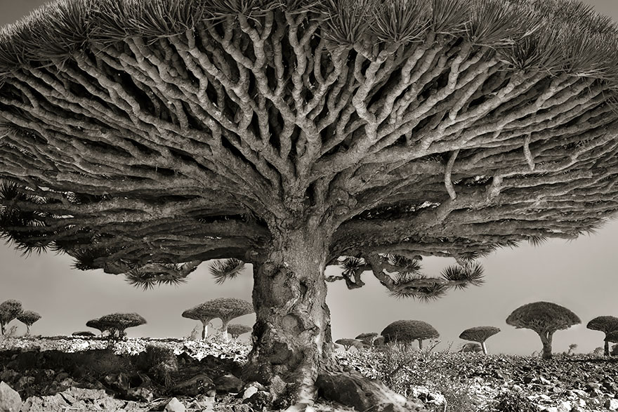 Деревья древние как мир