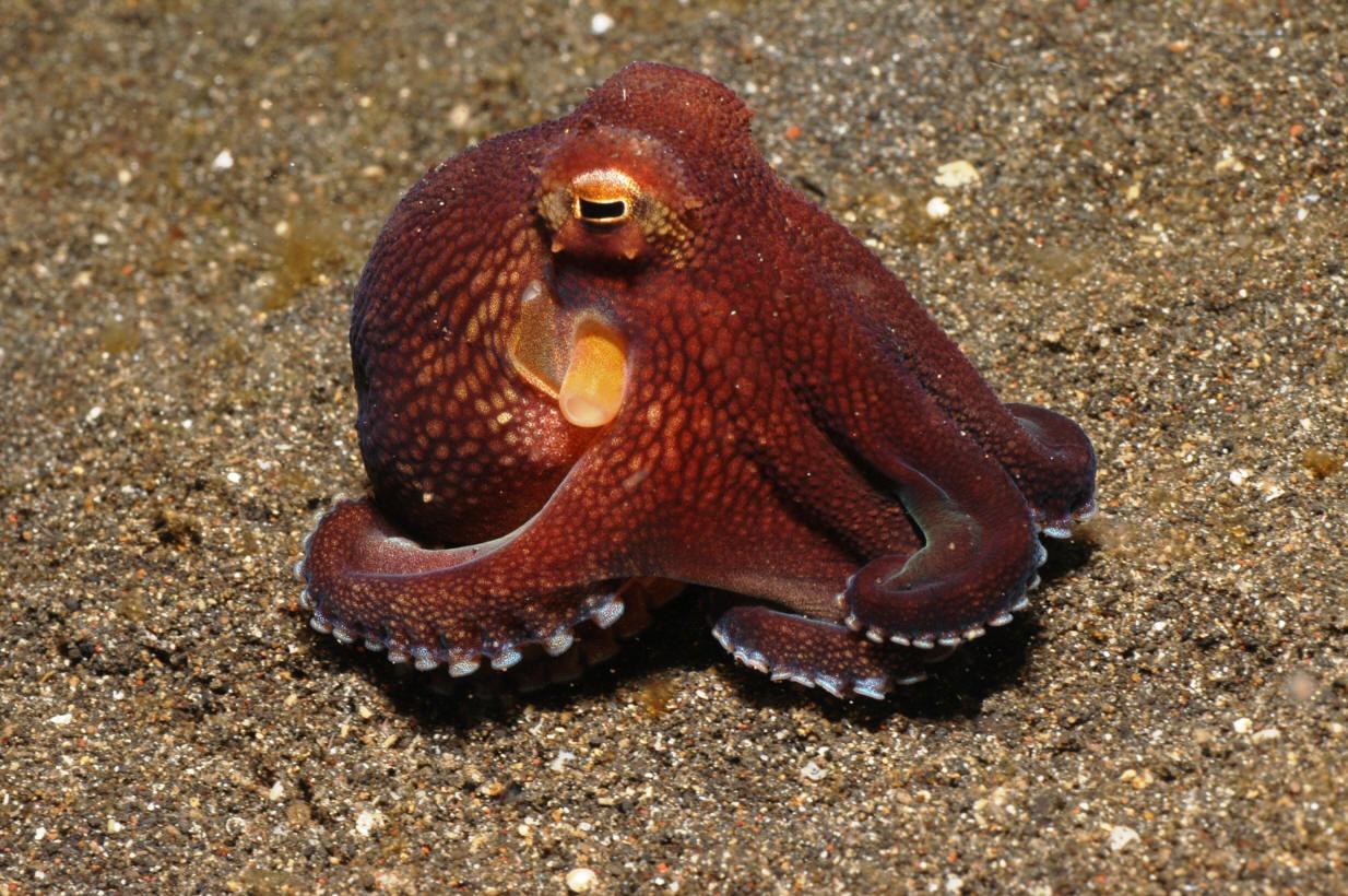фото морских обитателей с описанием пластик