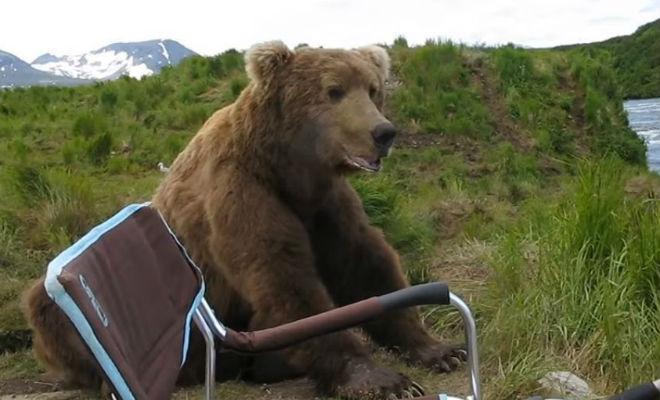 Медведь вышел из леса и сел рядом с рыбаком