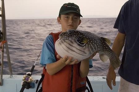 Маленькая рыбка, на совести которой много жертв...Фугусаши? М?