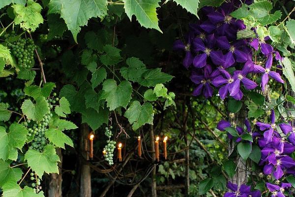 Растения для вертикального о…