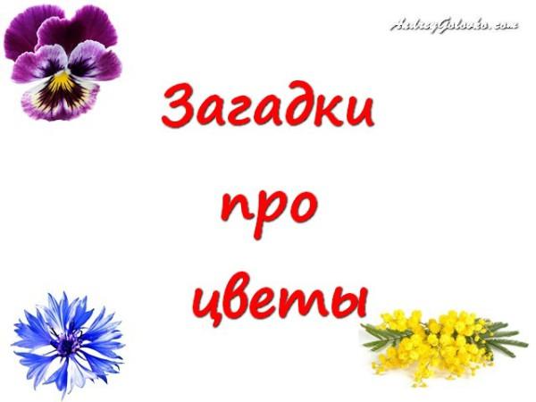 Про букет цветов загадки
