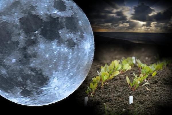 Лунный календарь садовода и огородника на июнь 2018: благоприятные дни для посадки рассады в грунт