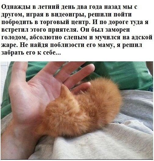 История одного кота.