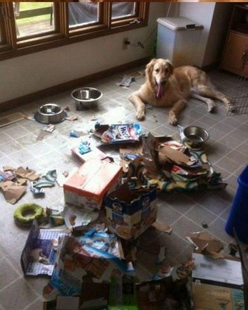 Чем занимаются собаки, когда хозяев нет дома.
