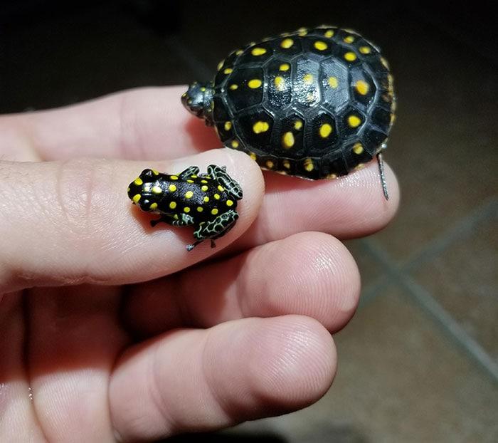 14 самых милых фото очень маленьких животных, которые помещаются на пальцах животные,позитив,природа