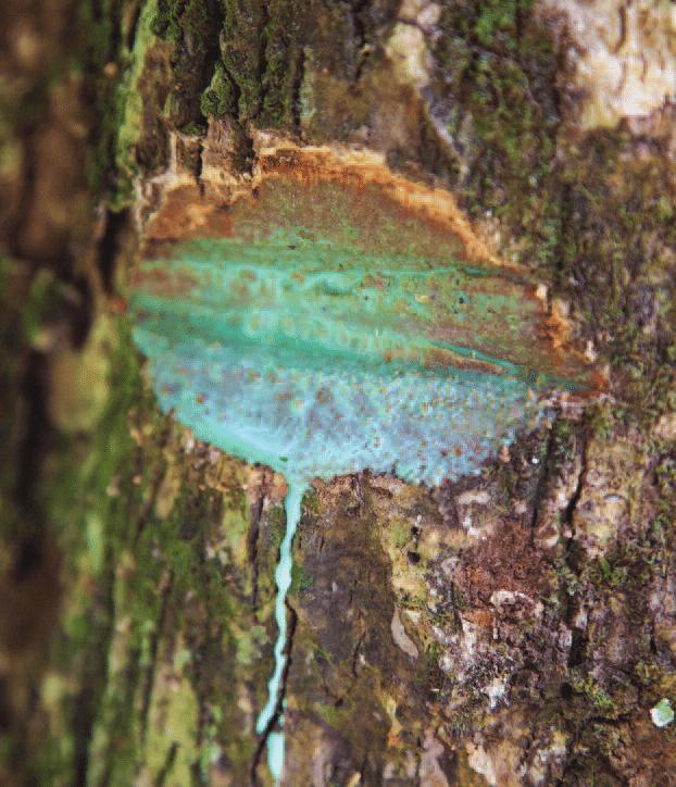 Деревья, по которым течёт металл