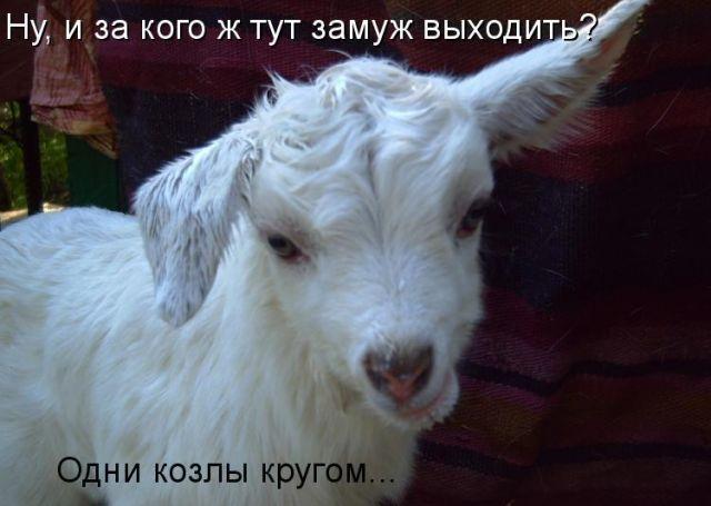 Фото с надписью ты коза