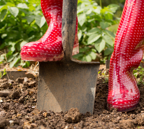 Можно ли перекапывать почву в ноябре?