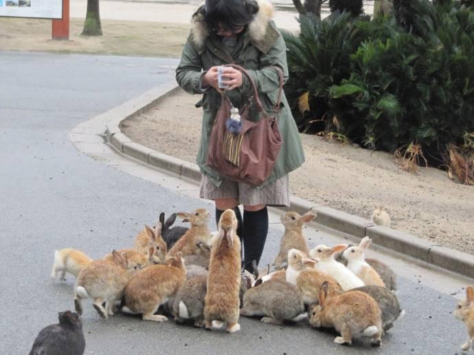 Окуносима - Японский остров кроликов