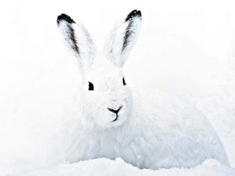 С гончей по глубокому снегу