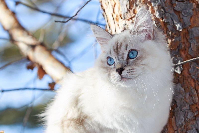 «Хулиган мохнатый!»: россиян в Сети насмешила история про кота, которого по ошибке отправили почтой
