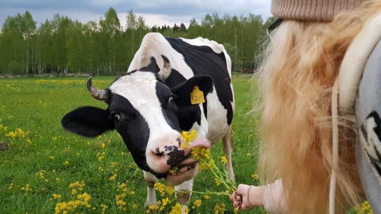 Немецкие ученые планируют приучить коров к туалету для снижения выбросов метана Общество