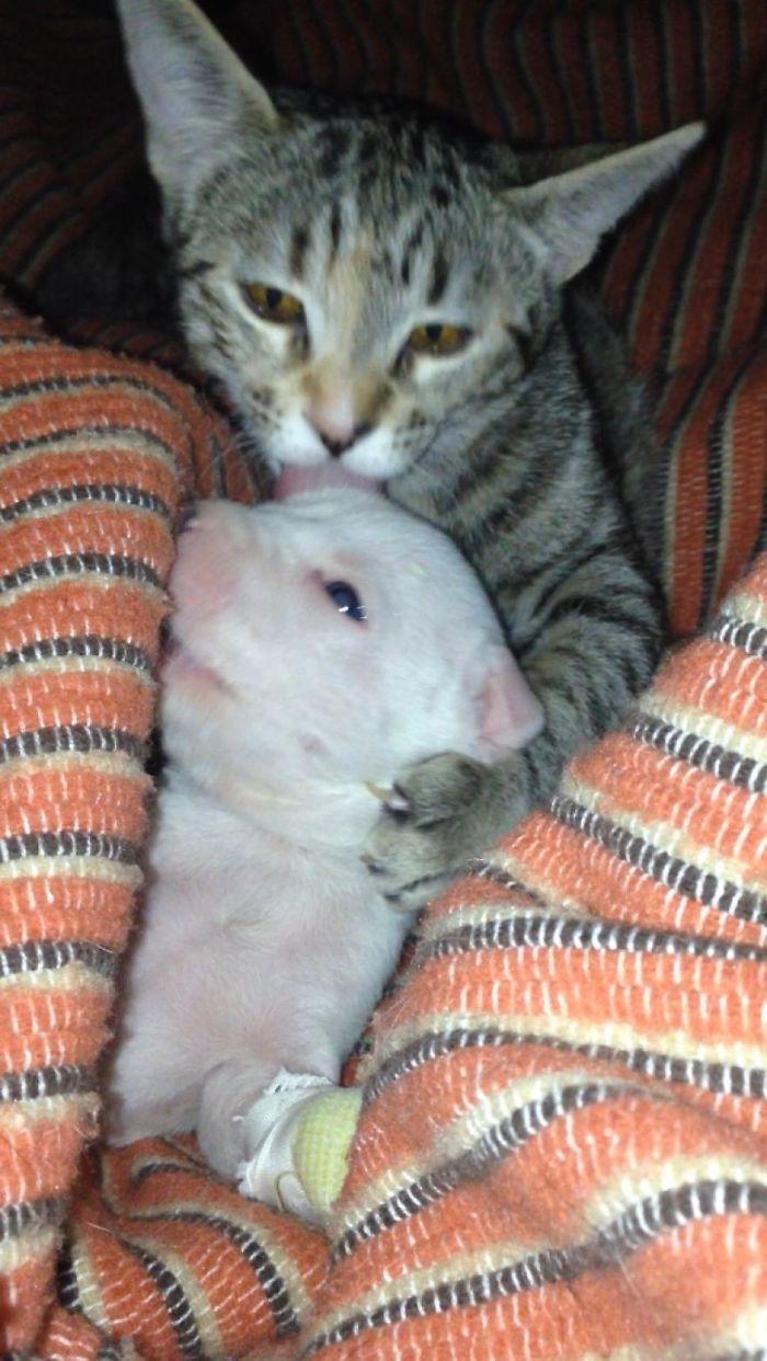 Кошки воспитывают щенка