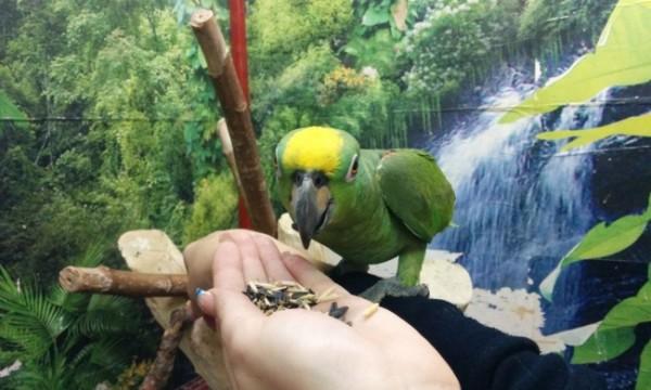 Лучшее объявление о продаже попугая