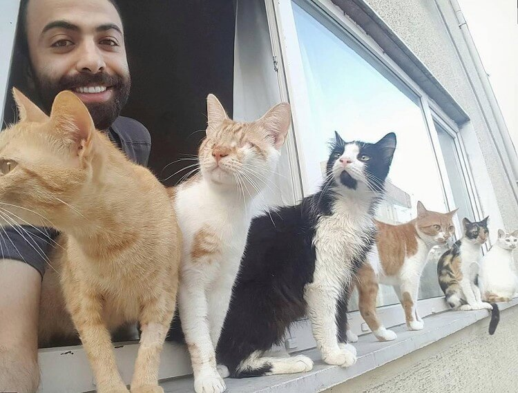 Мужчина спас девятерых кошек, и теперь по ночам они приходят его благодарить!