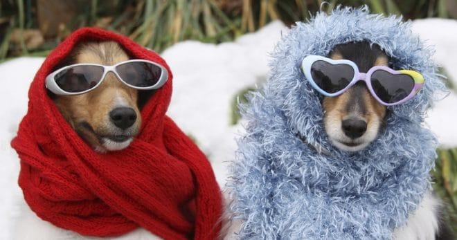 «А нам не холодно!»: 12 забавных фотографий питомцев, которых одели в теплые вещички