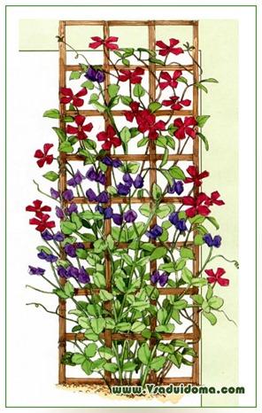 Самые популярные вьющиеся растения для дачи