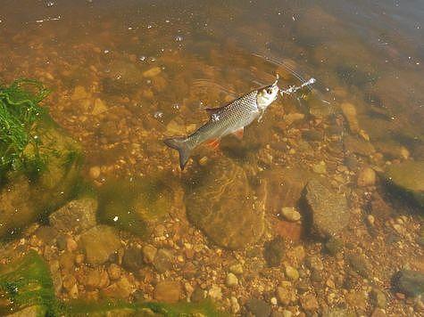 Особенные поплавки для ловли на течении