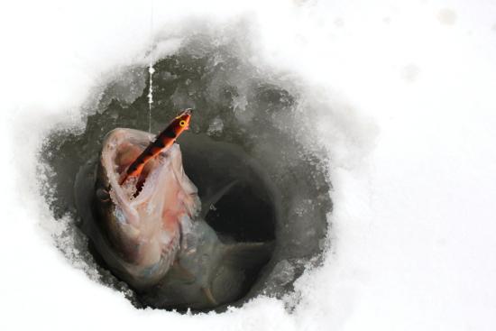 Картинка рыба в проруби