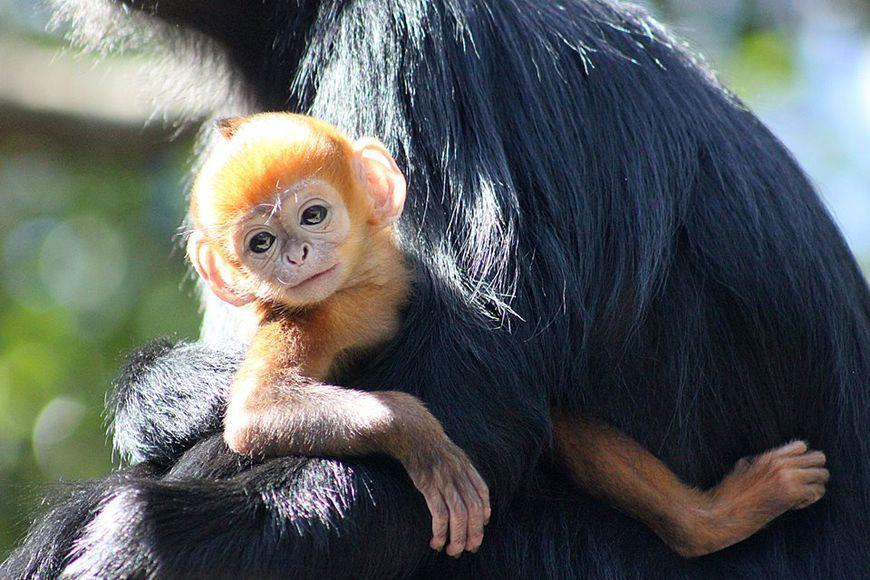В зоопарке Сиднея родилась Тыковка