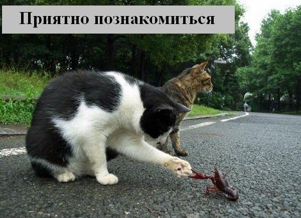 Зверьё моё... веселые картинки,животные,позитив,Смешные животные