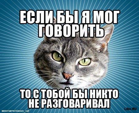 Фотомемы от типичного кота