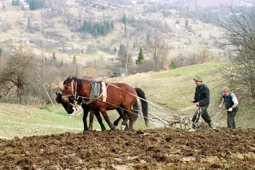 МВФ требует от Украины уничтожить собственное сельхозпроизводство