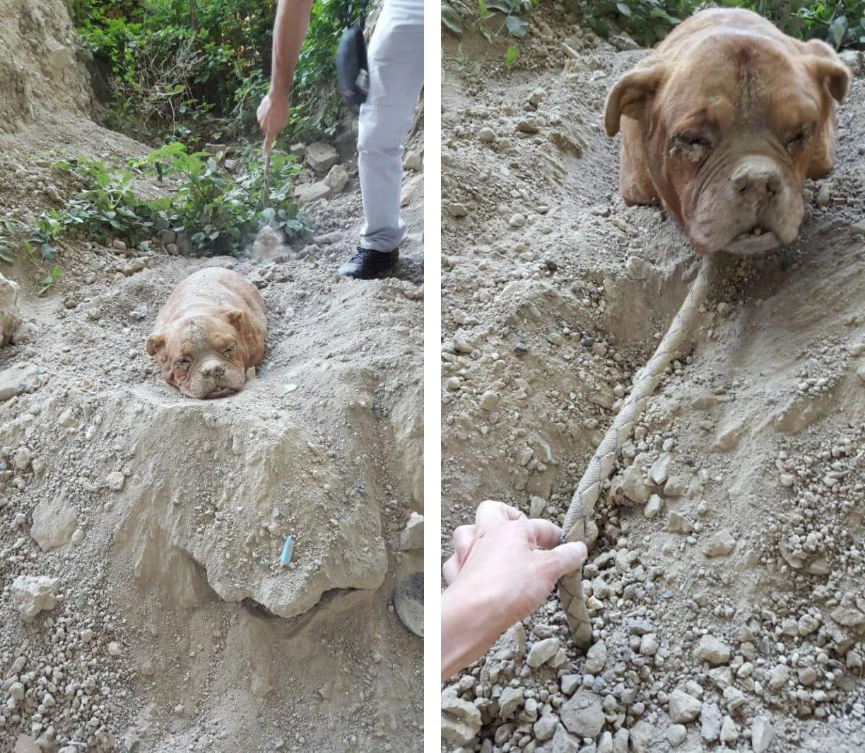 Сначала он подумал, что собака просто сидит в грязи, но подошел и ужаснулся…