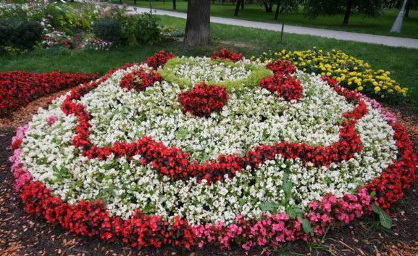 Низкорослые цветы для клумбы, которые будут цвести все лето - Дачный участок - медиаплатформа МирТесен
