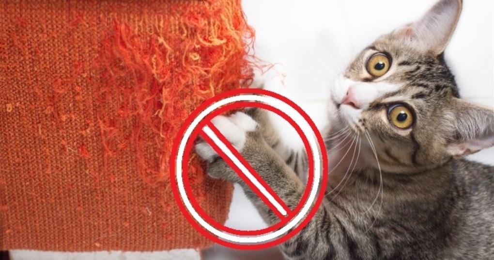Это средство отучит кота точить когти о диван. Делается просто, работает отлично