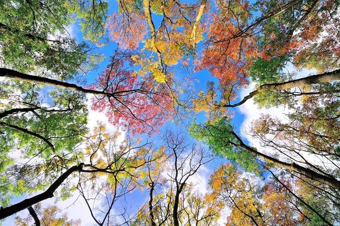 http://mtdata.ru/u25/photoE83F/20612053151-0/original.jpg