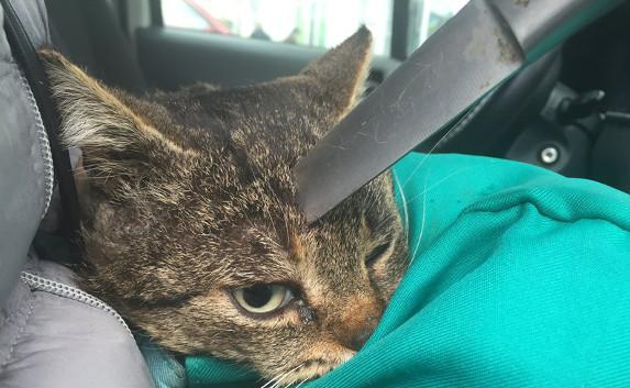 Коту извлекли из черепа кухонный нож