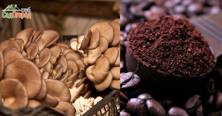 САД, ЦВЕТНИК И ОГОРОД. Выращивание грибов на кофе