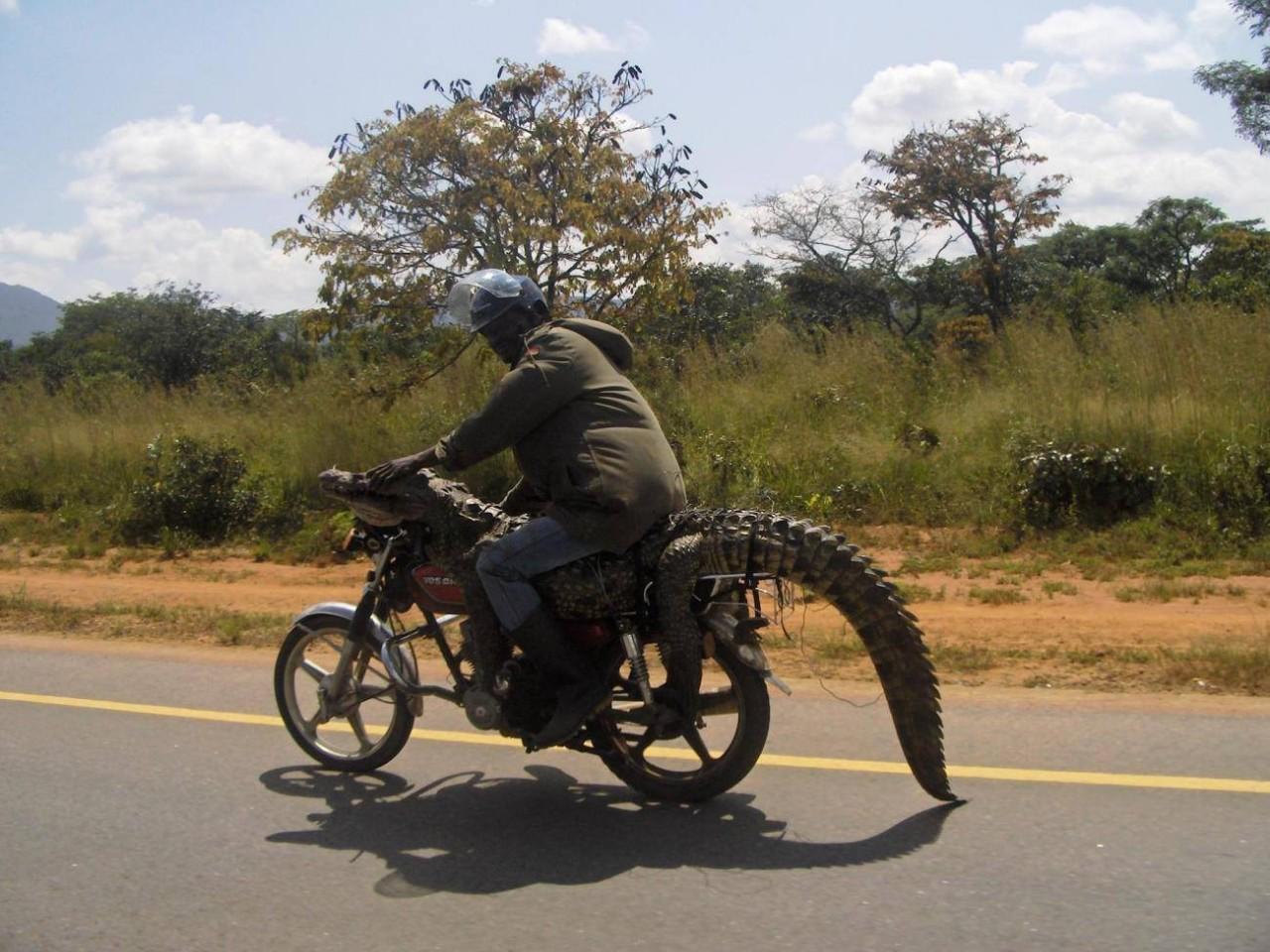 Привет из Африки