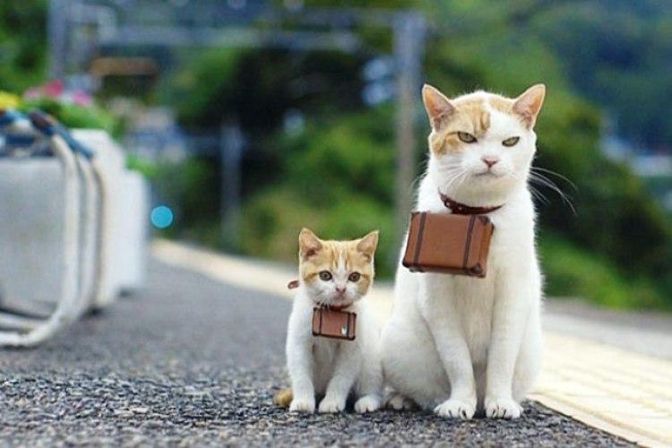 Как путешествовать с животным